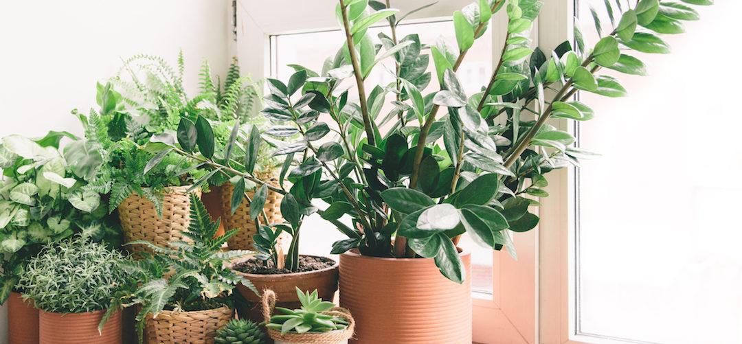 Les plantes vertes, pourquoi et comment les choisir ?