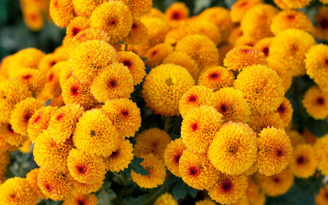 Les bouquets d'automne