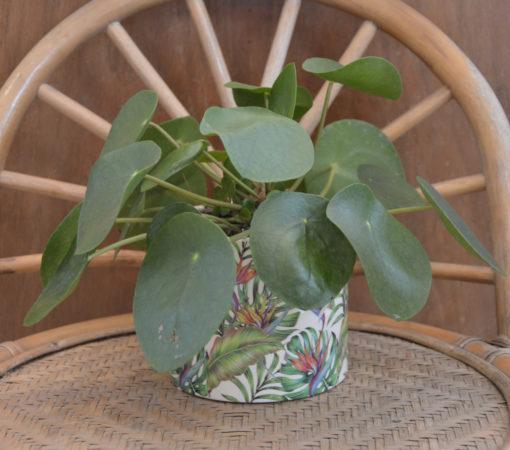 Plante verte pilea et son cache-pot à motifs tropical