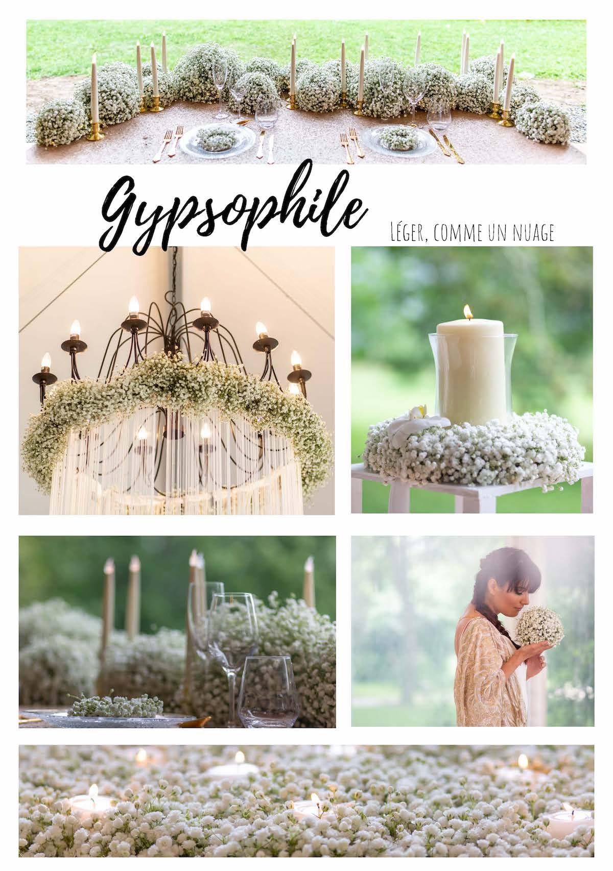 Planche Gypsophile