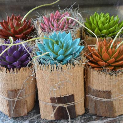 Plante verte Etcheveria avec son cache-pot en paille de différentes couleurs